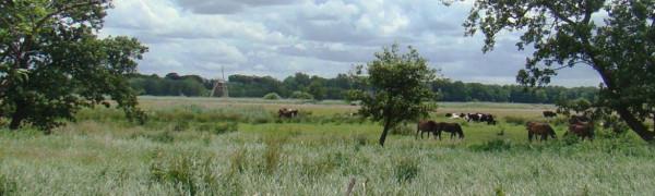 JDCH-Ev2015-Friese-wouden