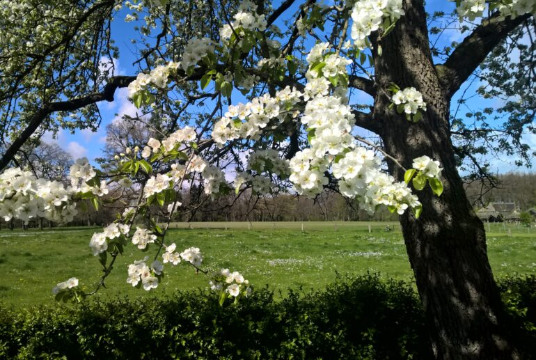 Voorjaar - Bloesem